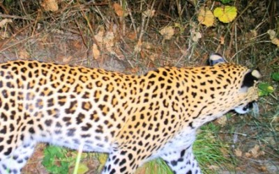Kids take on year long research project on the Leopards of the Leopard Trail